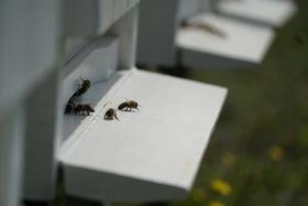 Żorskie Koło Pszczelarzy zaprasza na Mszę Kliknięcie w obrazek spowoduje wyświetlenie jego powiększenia